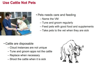 pets and cattle